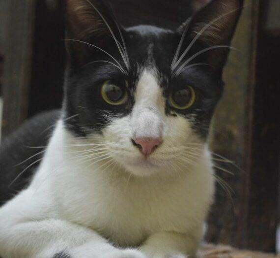 Mengenang Kucing Kesayanganku, Dolin Mercedes